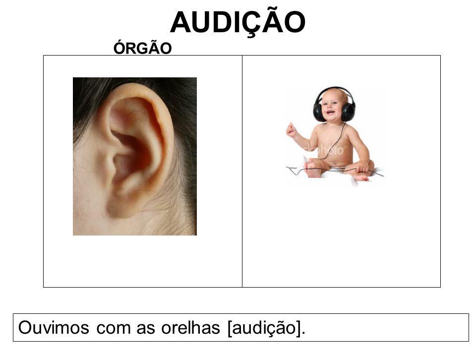 AUDIÇÃO ÓRGÃO Ouvimos com as orelhas [audição].